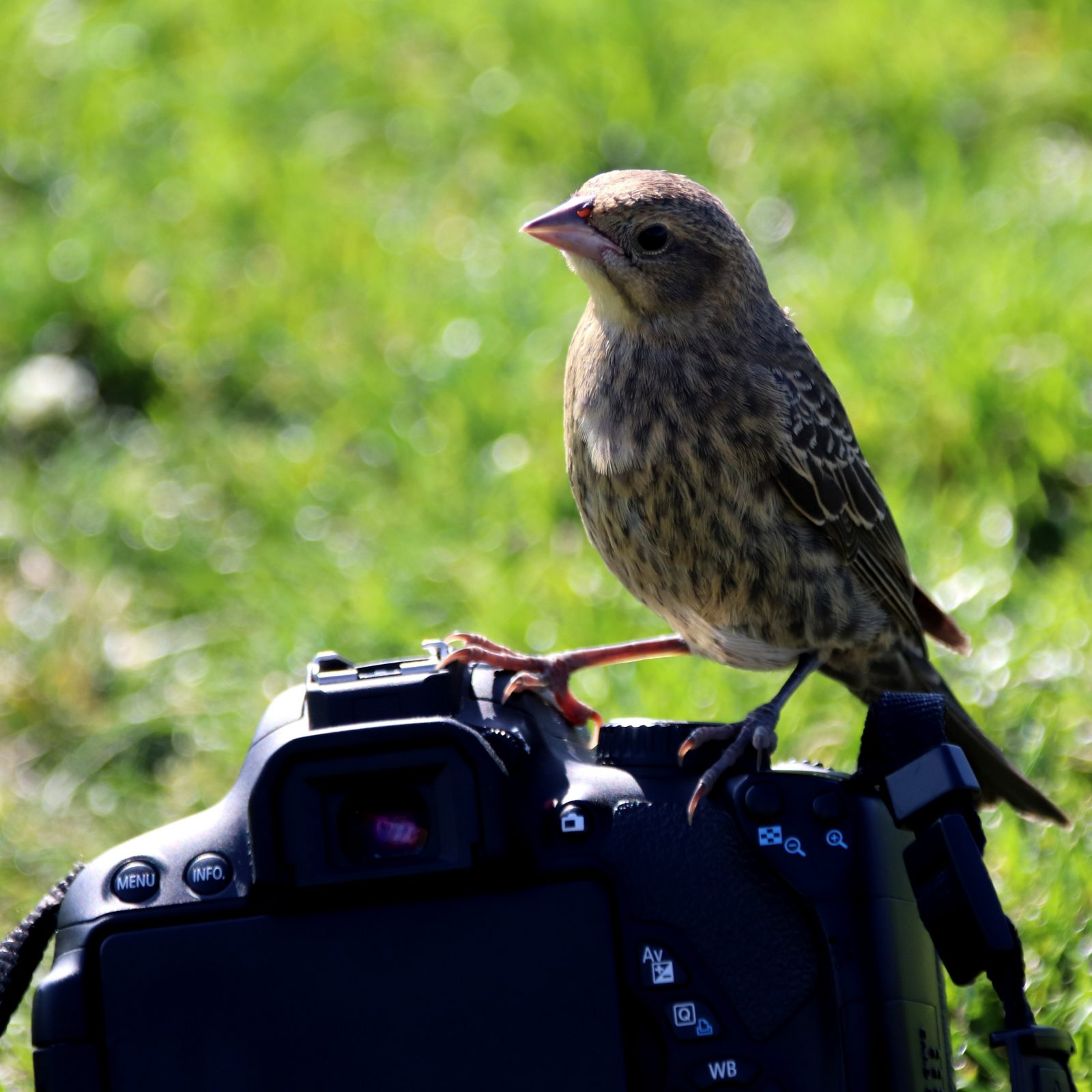 Photo of a bird perched on a camera